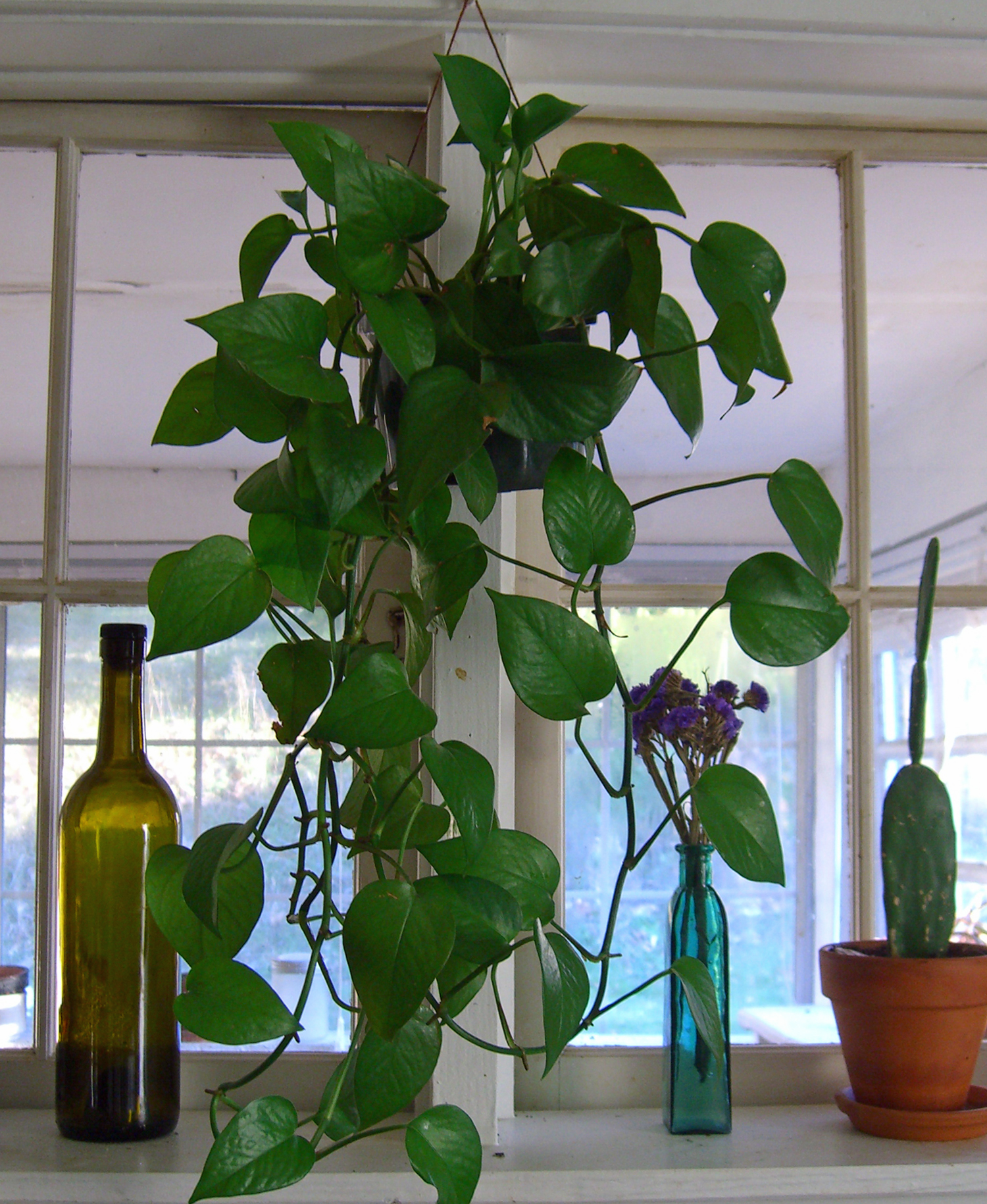 house plants woolgathering wildcrafting