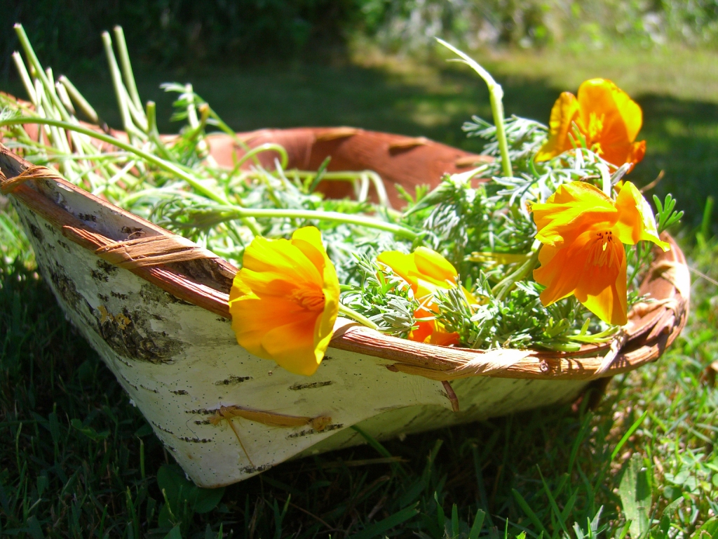 california poppy basket