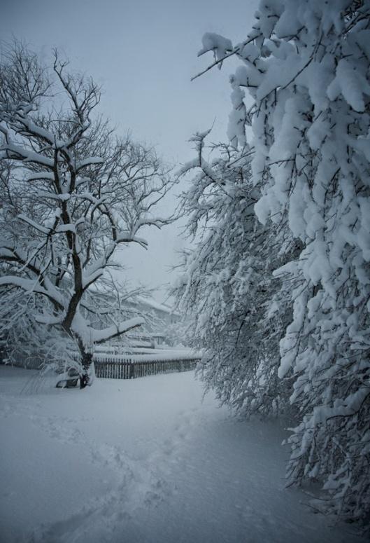 snowy day blue