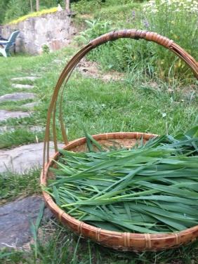 Milky oats in basket on path