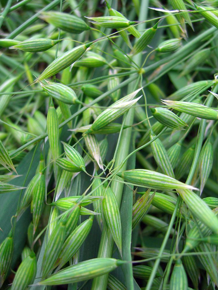oats close