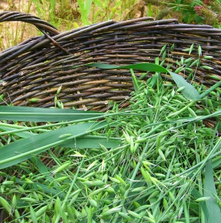 oats in basket