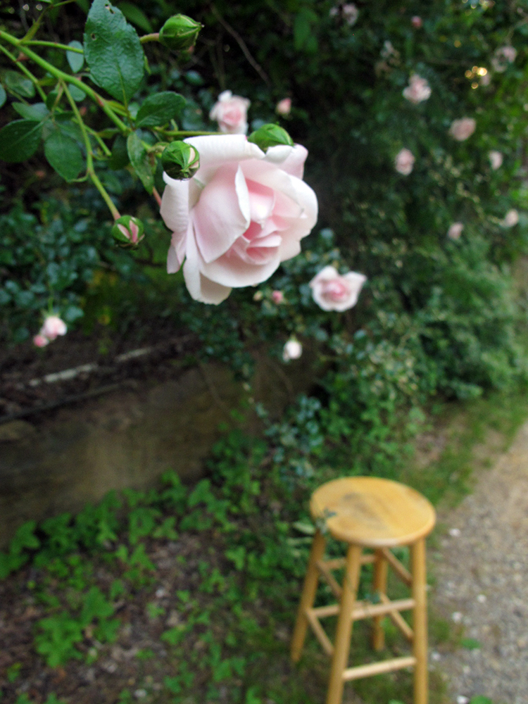 rose wall with stool