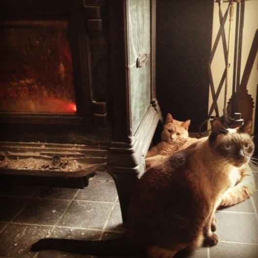 cats by woodstove