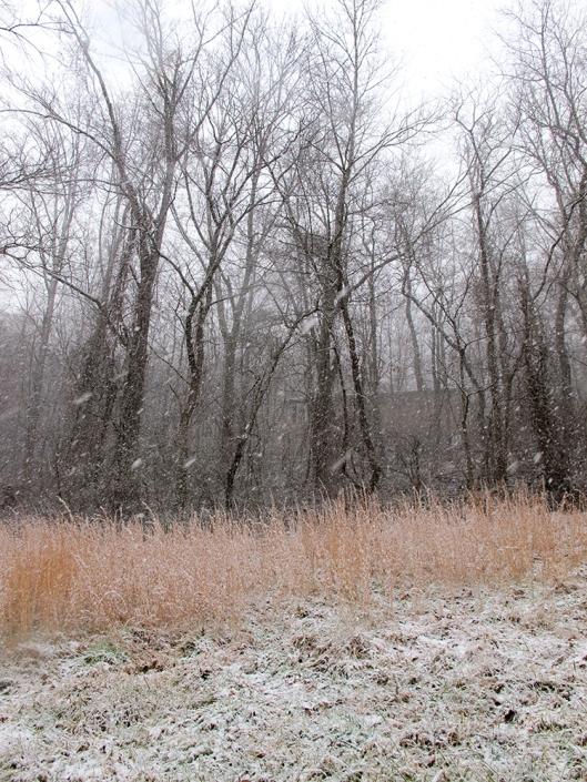 Snow globe storm tree line