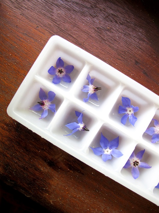 Borage ice cubes