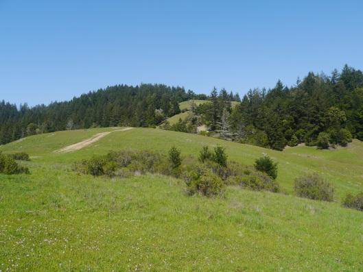 Coastal fir hills