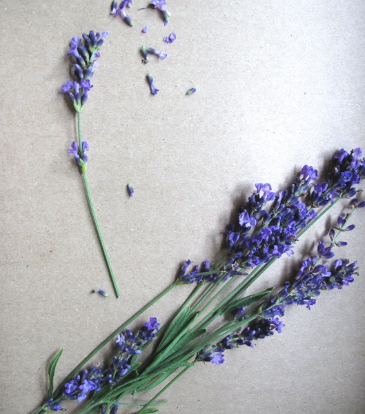 Lavender for syrup