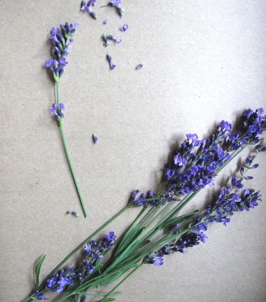Lavender for syrup