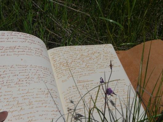 wild notebook