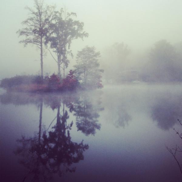 Fog on late eden