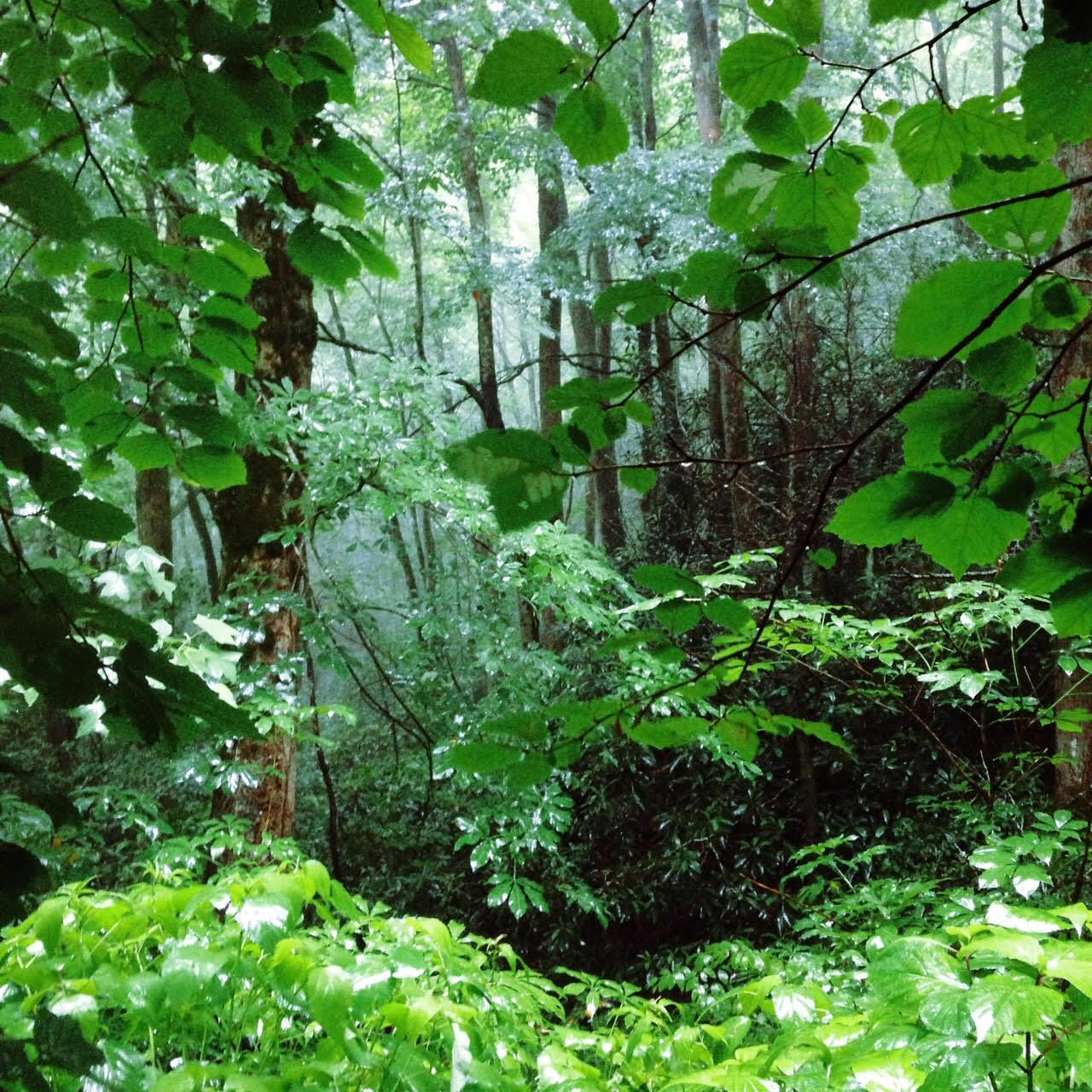 Rainsoaked Woods