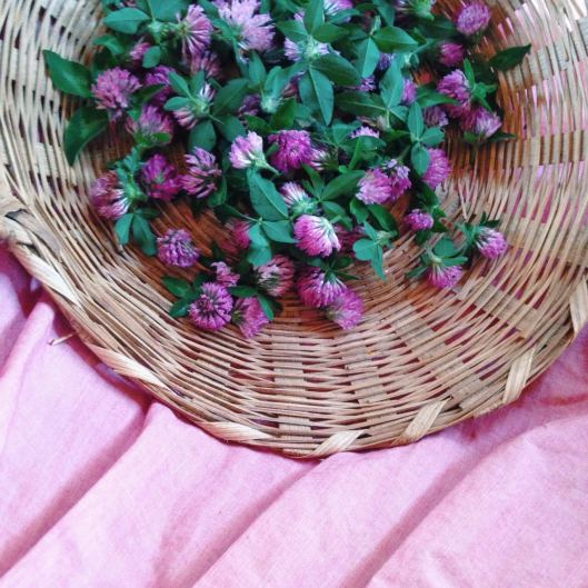 Red Clover Basket