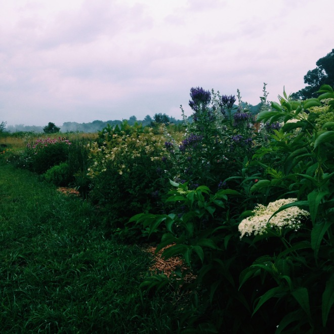 Juliet's Garden