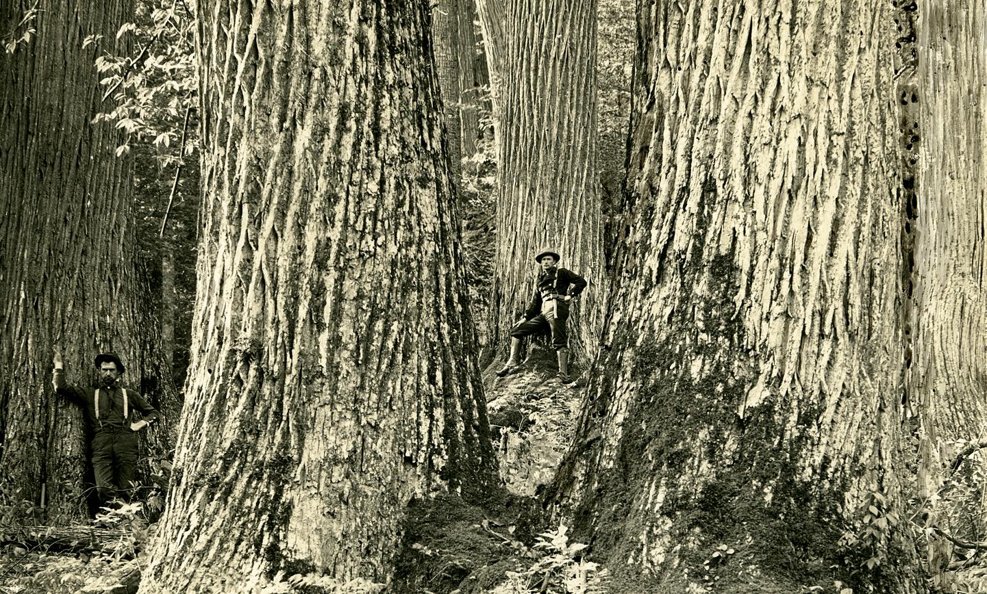 chestnut-cropped
