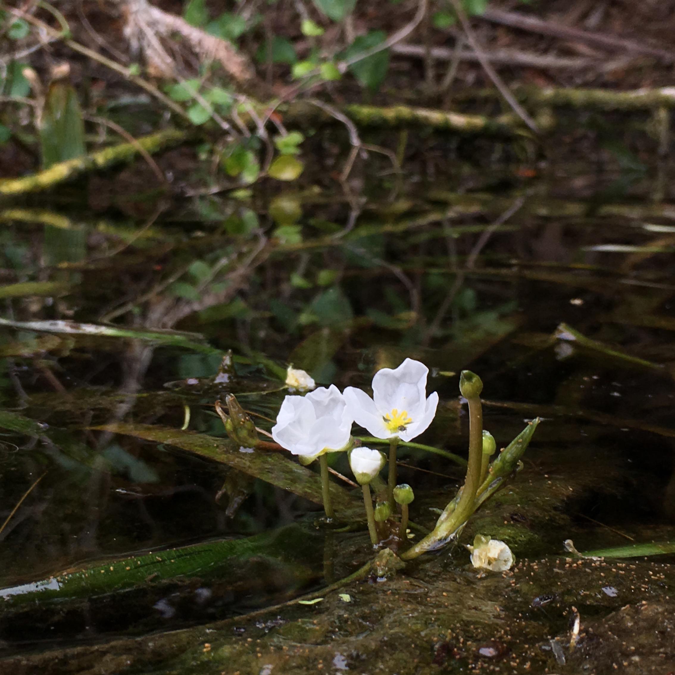 marsh-flower-1