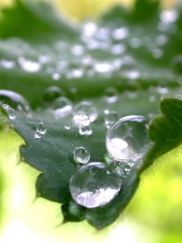 Water-drops-on-leaf-nettle-macro-wallpaper_1280x800